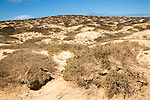 Inland sand dune landscape, La Isla Graciosa, Lanzarote, Canary Islands, Spain