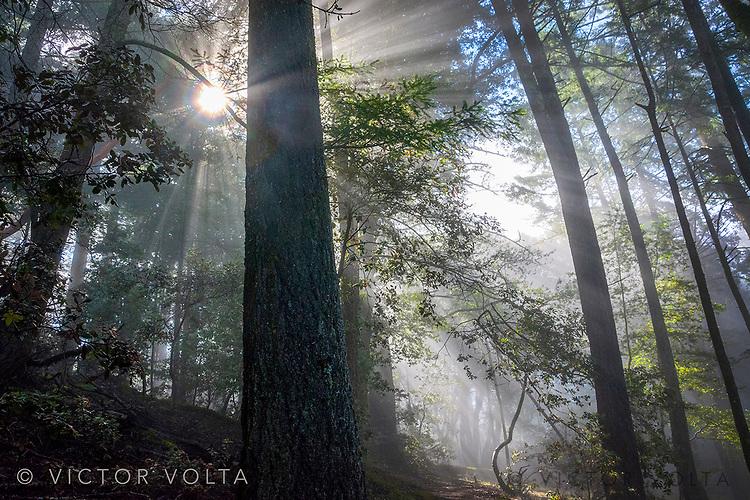 Forest near Pan Toll Ranger Station