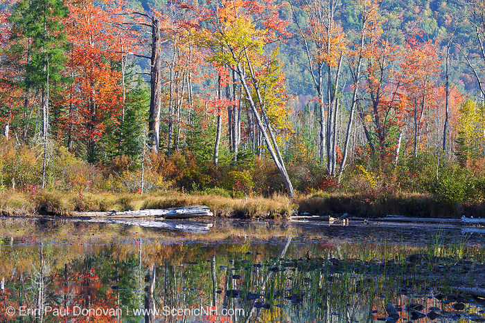Autumn foliage at Martin Meadow Pond in Lancaster, New Hampshire USA during the autumn months.