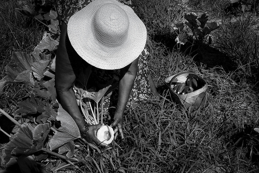 Sara` Reynolds Green picks vegetables in the Marshview Community Organic Farm on St. Helena Island. Green's mother was able to put three daughters through college back when the packing houses on the island were paying the local Gullah farmers for their produce. Today there are large corporate farming operations on the island that they would prefer to deal with.
