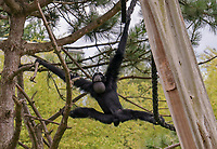 Brüllaffen - Jaderberg 21.07.2020: Tier- und Freizeitpark Jaderpark