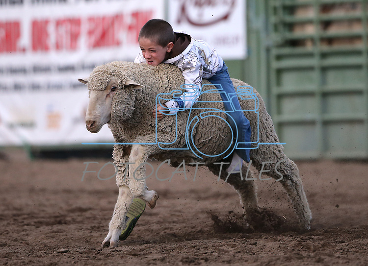Logan Lott, 7, of Carson City, competes in the Mutton Busting event at the 5th Annual Carson City Bulls, Broncs &amp; Barrels event at Fuji Park, in Carson City, Nev., on Saturday, July 29, 2017. <br /> Photo by Cathleen Allison/Nevada Photo Source