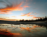 USA, Wyoming, silhouette of trees at sunset, Lower Geyser Basin, Yellowstone National Park