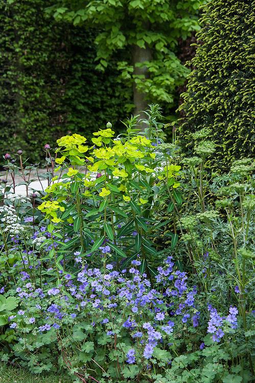 Geranium pyrenaicum 'Bill Wallis' and Euphorbia wallichii, Brewin Dolphin Garden, Cleve West, RHS Chelsea Flower Show 2012.
