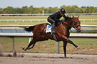#150Fasig-Tipton Florida Sale,Under Tack Show. Palm Meadows Florida 03-23-2012 Arron Haggart/Eclipse Sportswire.