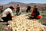 (84/194/14)-Santa Ursula-Cajamarca-Peru - August 04, 1984 -- Farmers sorting their harvest of maize / corn; FNS/SAN, food, agriculture, rural, man, men, woman, nature, people -- Photo: © HorstWagner.eu