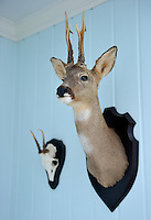 The head of a roe deer is mounted on the wall of a boy's bedroom
