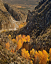 Fall Colors - Lonely Road