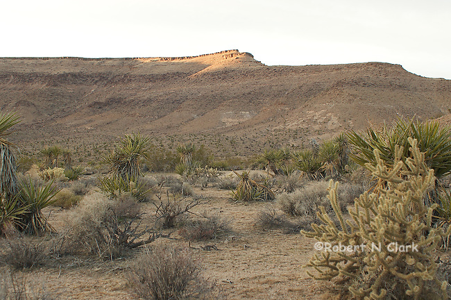 Images taken in the Mojave National Preserve