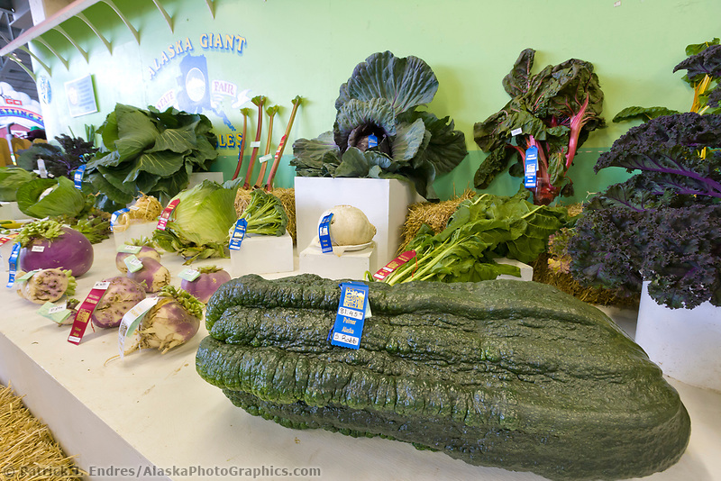 1st place ribbon for the largest zuchinni (81.45 pounds) at the 2007 Alaska State Fair in Palmer, Alaska.