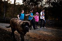 Ohio, Usa. Oktober 2016. Liam, Fin, Connely og Delaney gpr en tur ned til hestene. I forgrunnen går Rocky. Fotografier til dokument om valget i Usa og Appalachene. Foto: Christopher Olssøn