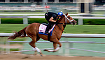 LOUISVILLE, KY - MAY 02: Monomoy Girl works out on the track in preparation for the Kentucky Oaks at Churchill Downs on May 2, 2018 in Louisville, Kentucky. (Photo by Sydney Serio/Eclipse Sportswire/Getty Images)