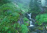 small waterfall in fog on Mt. Rainier, Mt Rainier National Park, Washington State