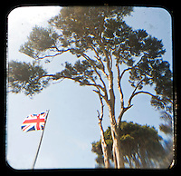 Union Jack & Kanuka tree