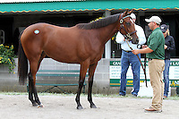 Hip #110 Galileo - La Chunga filly at the  Keeneland September Yearling Sale.  September 9, 2012.