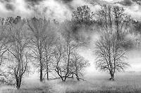 Bare Trees and Fog, Columbia Gorge, Oregon