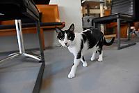 Neko Ngeru Cat Adoption Cafe, Lower Hutt, New Zealand on Monday 8 January 2018. <br /> Photo by Masanori Udagawa. <br /> www.photowellington.photoshelter.com