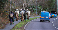 BNPS.co.uk (01202 558833)<br /> Pic: PhilYeomans/BNPS<br /> <br /> End of the day...<br /> <br /> Robert Sampson's Percheron heavy horses have been brought in to help clear felled tree's from the hilly site of St Catherines hill in Dorset.<br /> <br /> The SSSI site is being cleared of some of its tree cover as part of a 9 year stewardship scheme to return the historic site to a more natural open heathland appearance.<br /> <br /> Heavy machinery is not allowed on the site so Robert's massive horses are perfect for a more enviromentally sound method of removing the heavy timber.