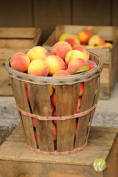 Free stone peaches in half bushel basket at Dincher's farm market.