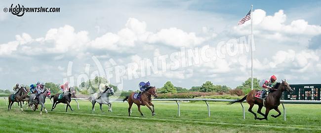 Alamanda Drive winning at Delaware Park on 8/21/13