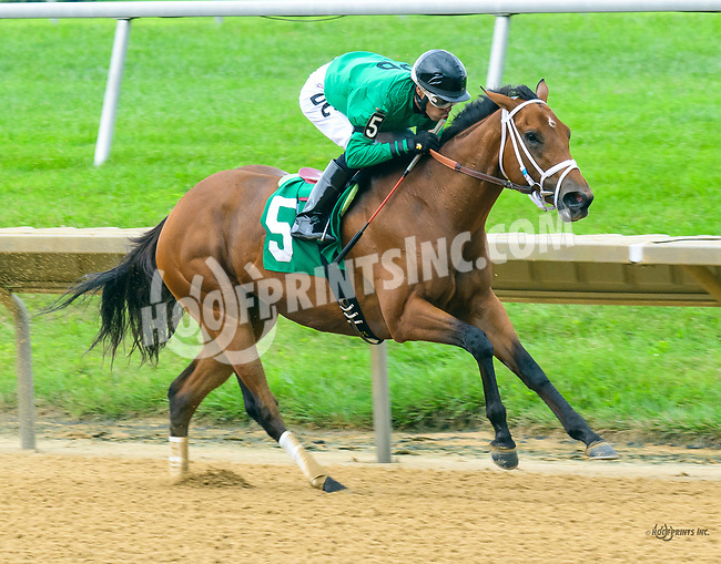 Angel At War winning at Delaware Park on 7/27/17