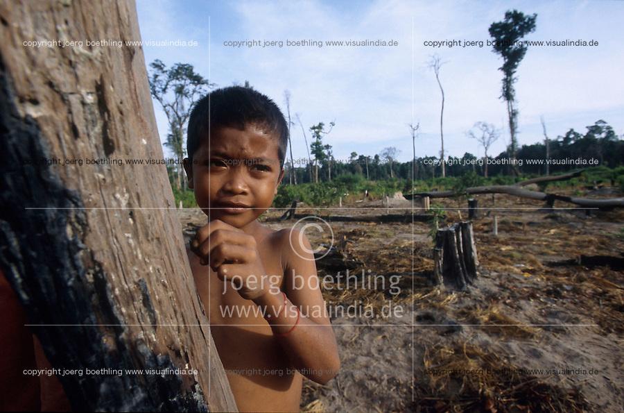 CAMBODIA Mekong River, illegal deforestion of rainforest / KAMBODSCHA Mekong Fluß, illegale Abholzung von Regenwald