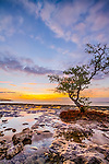 A dramatic sunrise framed with blue sky and partly wispy clouds and a solitary mangrove.