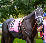 OCTOBER 8, 2018: Guacamole the Matron Stakes at Belmont Park on October 8, 2018 in Elmont, NY.  Sue Kawczynski/ESW/CSM