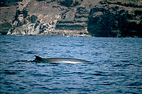 A Bryde's whale off La Gomera (Canary Islands, NE Atlantic Ocean)