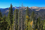 Pine trees and aspens during autumn seen against the high peaks of Rocky Mountain National Park, Colorado, USA