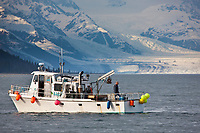 Shrimp fishing boat in Port Wells, with a view north to the Chugach mountains and Harvard glacier in College Fjord, Prince William Sound, Alaska.
