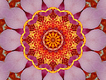 Pink orchid mandala - made from digitally enhanced photograph of beautiful pink orchid flower.
