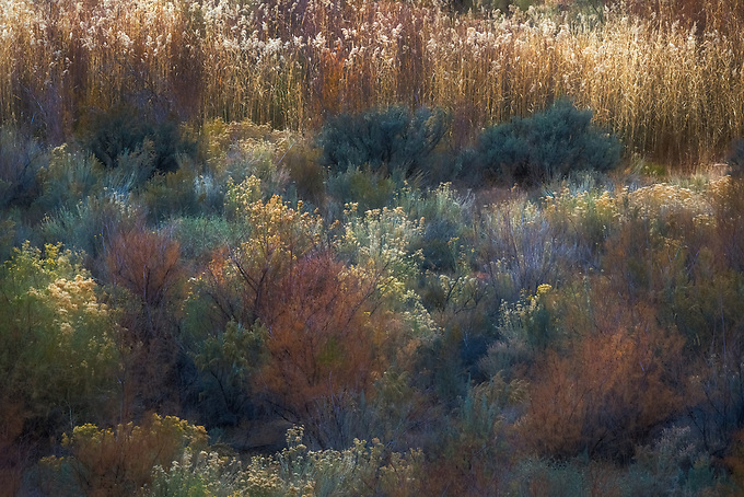 A colorful array of desert flora illuminated by late afternoon light in Utah.
