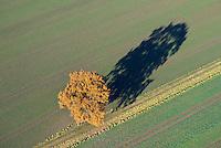 Eiche im Herbst auf Acker: DEUTSCHLAND, HAMBURG, (GERMANY), 27.11.2016: Eiche im Herbst auf Acker