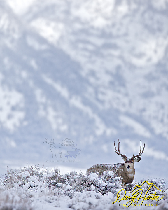Winter Buck, Big Country