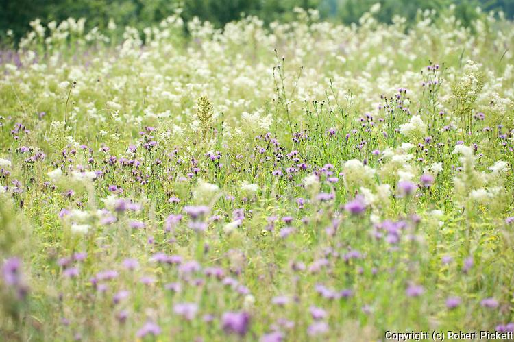 Flower Meadow, Brasov-Buzau, Romania