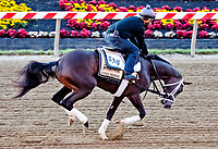 BALTIMORE, MD - MAY 15: Kentucky Derby winner Always Dreaming gallops on track with exercise rider Nick Bush in preparation for the Preakness Stakes this week at Pimlico Race Course on May 15, 2017 in Baltimore, Maryland.(Photo by Scott Serio/Eclipse Sportswire/Getty Images)