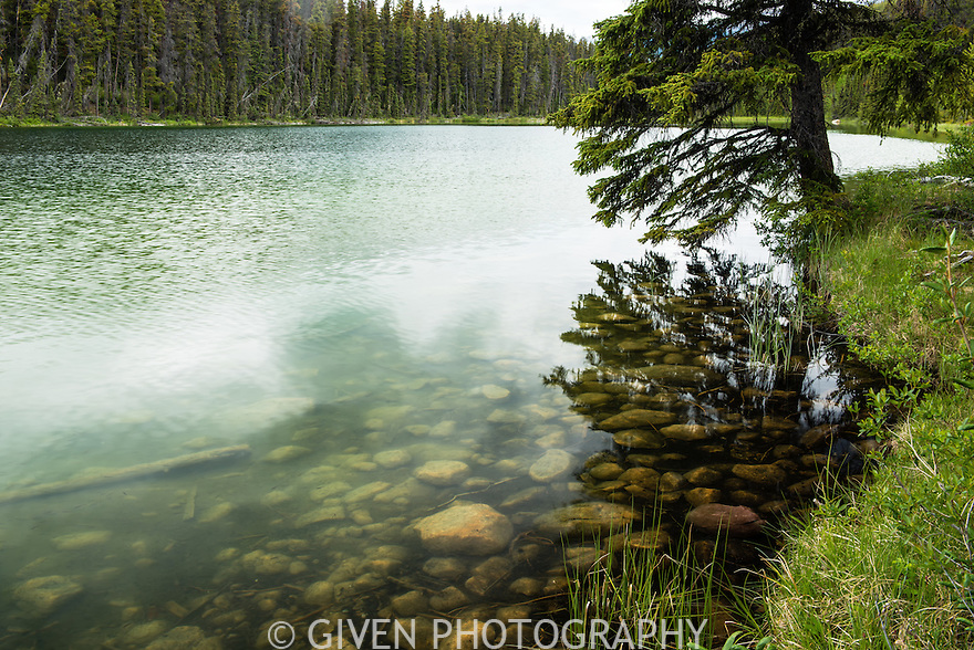Lake and Spruce Tree