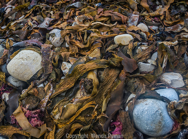 Dried washed up kelp and seaweed make a colorful contrast against the gray rocks.