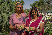 Gogaram Giri, 35, and her mother-in-law Pushpadevi Giri, 55, pose for a portrait after harvesting beans from their kitchen garden in a village near Bikaner, Rajasthan, India on October 23, 2016. Non-profit organisation Technoserve works with farmer's wives in Bikaner, providing technical support and training for edible gardening, to improve the nutritional quality of their food and relieve financial stress on farming communities. Photograph by Suzanne Lee for Technoserve