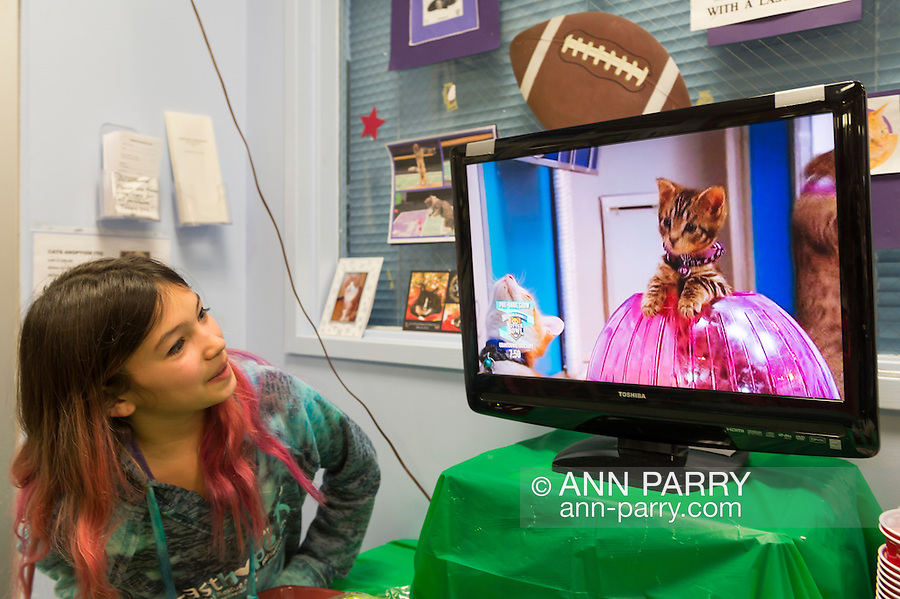 Wantagh, New York, USA. February 5, 2017. SUZANNE FERRARA, 10, of Plainview, watches kitten playing in pink Hamster Ball on television during Hallmark Channel's Kitten Bowl TV show at Last Hope Animal Rescue during its Open House Party. Kittens in its Last Hope Lions team, played against kittens in North Shore Bengals (team. Last Hope kittens have been part of each Kitten Bowl, which has purpose of promoting cat and kitten adoptions.