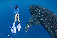 RX4391-D. Whale Shark (Rhincodon typus) and female snorkeler (model released). Many divers and snorkelers rate encounters with the largest fish in the sea as one of the top experiences beneath the waves. Gulf of Mexico, Mexico, Caribbean Sea.<br /> Photo Copyright &copy; Brandon Cole. All rights reserved worldwide.  www.brandoncole.com