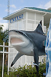 Grand Bahama Island, The Bahamas; dolpin and shark statue at the marina entrance to UNEXSO