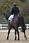 Stapleford Abbotts. United Kingdom. 08 November 2019. Class 8. British Dressage. Brook Farm training centre. Stapleford Abbotts. Essex. United Kingdom. Credit Garry Bowden/Sport in Pictures.~ 08/11/2019.  MANDATORY Credit Garry Bowden/SIP photo agency - NO UNAUTHORISED USE - 07837 394578