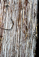 Cypress Tree bark, Eno River State Park, near Durham, NC, August 2009.  (Photo by Brian  Cleary/www.bcpix.com)