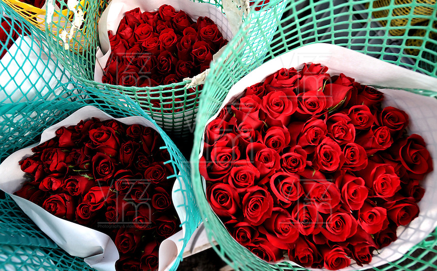 COLOMBIA- 29-01-2013 Llega febrero y los floricultores colombianos tienen la gran oportunidad de iniciar el a-o con el pie derecho gracias al d'a de San Valent'n que es por excelencia el d'a de los enamorados en Estados Unidos y Europa. Por estos d'as las plantaciones de flores en la  Sabana de Bogot? trabajan a todo marcha para surtir el mercado, para este a-o en el cual esperan incrementar sus ventas en 12% respecto al a-o anterior. (Foto: VizzorImage / Luis Ram'rez / Staff). February is coming and colombian growers have a big opportunity to start this year so well thanks to the quintessential Valentine's Day in USA and Europe. For these days the Sabana of Bogota flowers plantations are working full time to fill the market for this year and increase their sales by 12% compared to 2012. /Photos VizzorImage  / Luis Ram'rez / Staff).