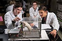 Psychology majors Nathan Weber, left, and Jacob Lim, right, train a wistar rat using a Skinner box during associate professor of psychology Gwen Lupfer's Psychology of Learning Laboratory in UAA's Natural Sciences Building.