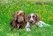 Marek, ANIMALS, REALISTISCHE TIERE, ANIMALES REALISTICOS, dogs, photos+++++,PLMP3217,#a#, EVERYDAY