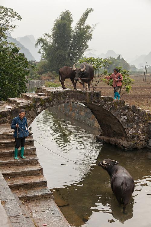 Farmers rangle a couple of water buffalo over a centuried old bridge near the Yulong River.