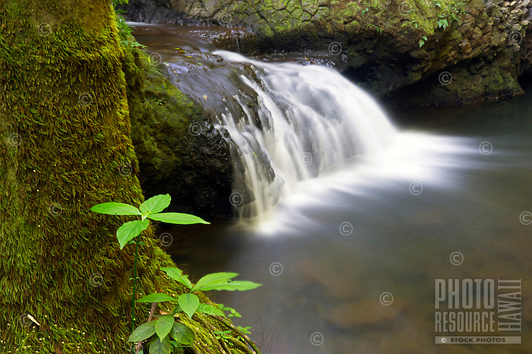 Onomea Stream, Big Island.